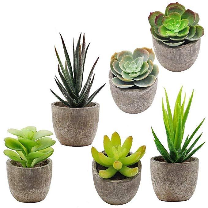 Several various succulent plants in miniature pots.